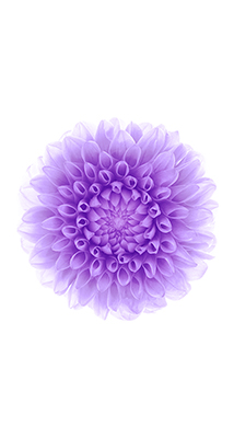Fondo-Pantalla-iPhone-6-flor-violeta-min