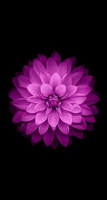 Fondo-Pantalla-iPhone-6-flor-lila-min